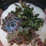 Hydrangeas Flower Delivery
